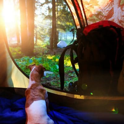 8 Must Read Tips for Camping with Your Dog